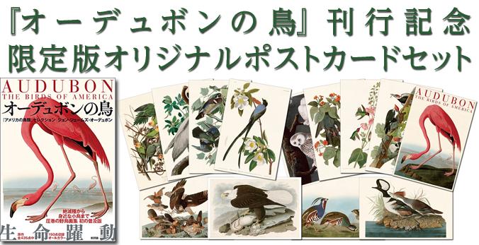 『オーデュボンの鳥』刊行記念限定版オリジナルポストカードセット販売のお知らせ